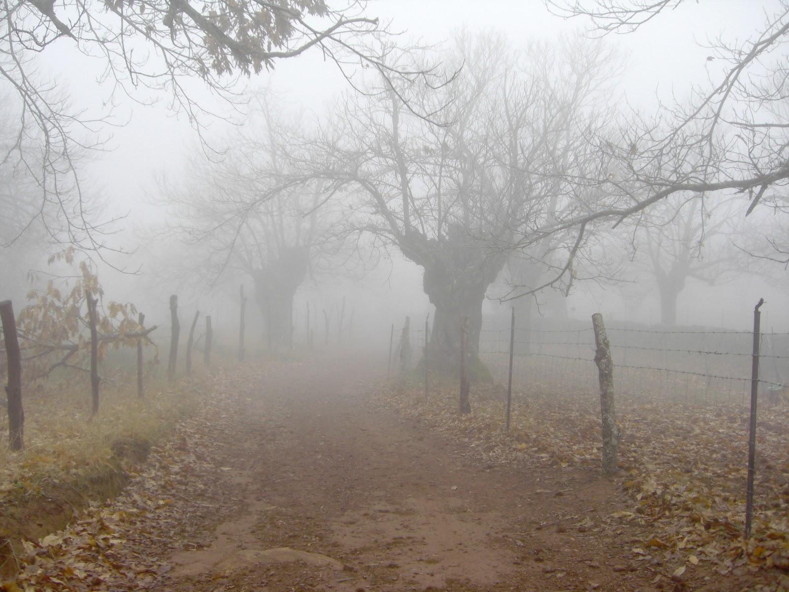 La Plata de la Esperanza de un Pueblo. 2ª parte. [Lejos de Foltalan][16 de Mayo] Niebla1