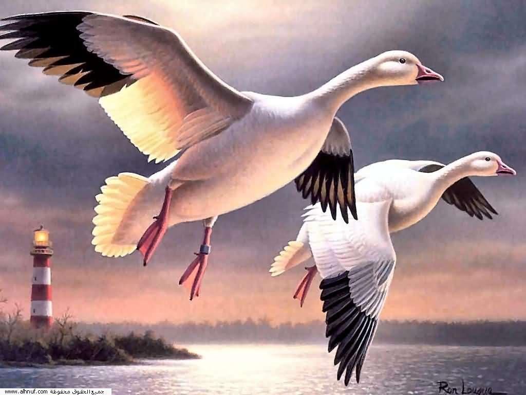 اللي يوصل رقم3 يحول عضو بالعصا السحرية Birds__%2825%29