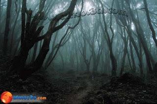 العجوز الذى ارسل اولاده الثلاثة الى الغابة المظلمة ليأتوا بفاكهة لا تظهر إلا مرة كل مئة عام  Dark_forest