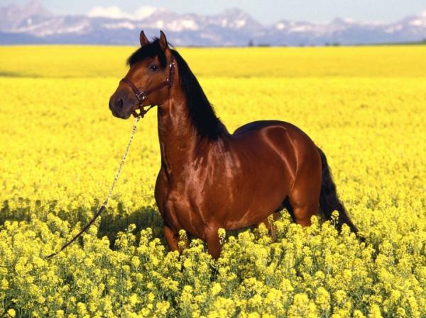 les chevaux.. - Page 2 Les-plus-beaux-chevaux-laurie-anne320101023011109