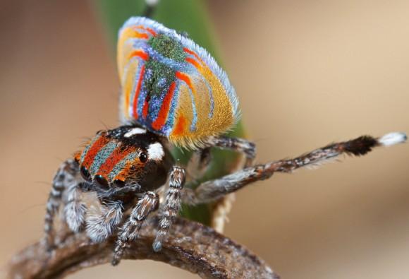 اجمل عنكبوت فى العالم Image008-580x395