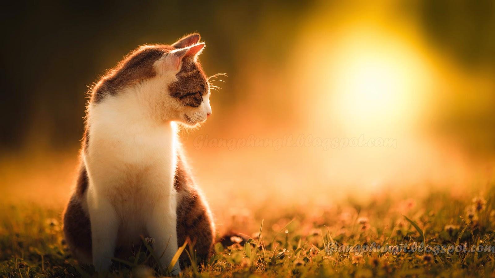 Album ảnh về chú mèo đáng yêu Anh-meo