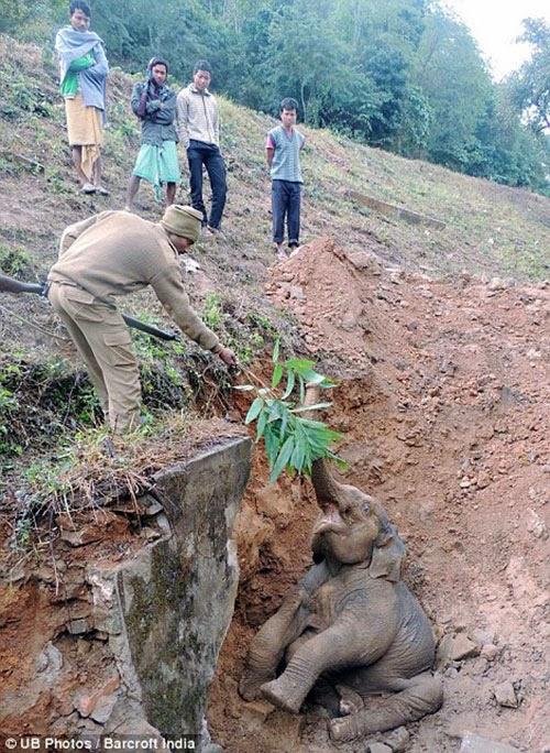كيف تخرج فيل من حفرة A3