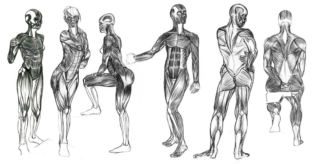 Nos créaZions - Page 6 Anatomie