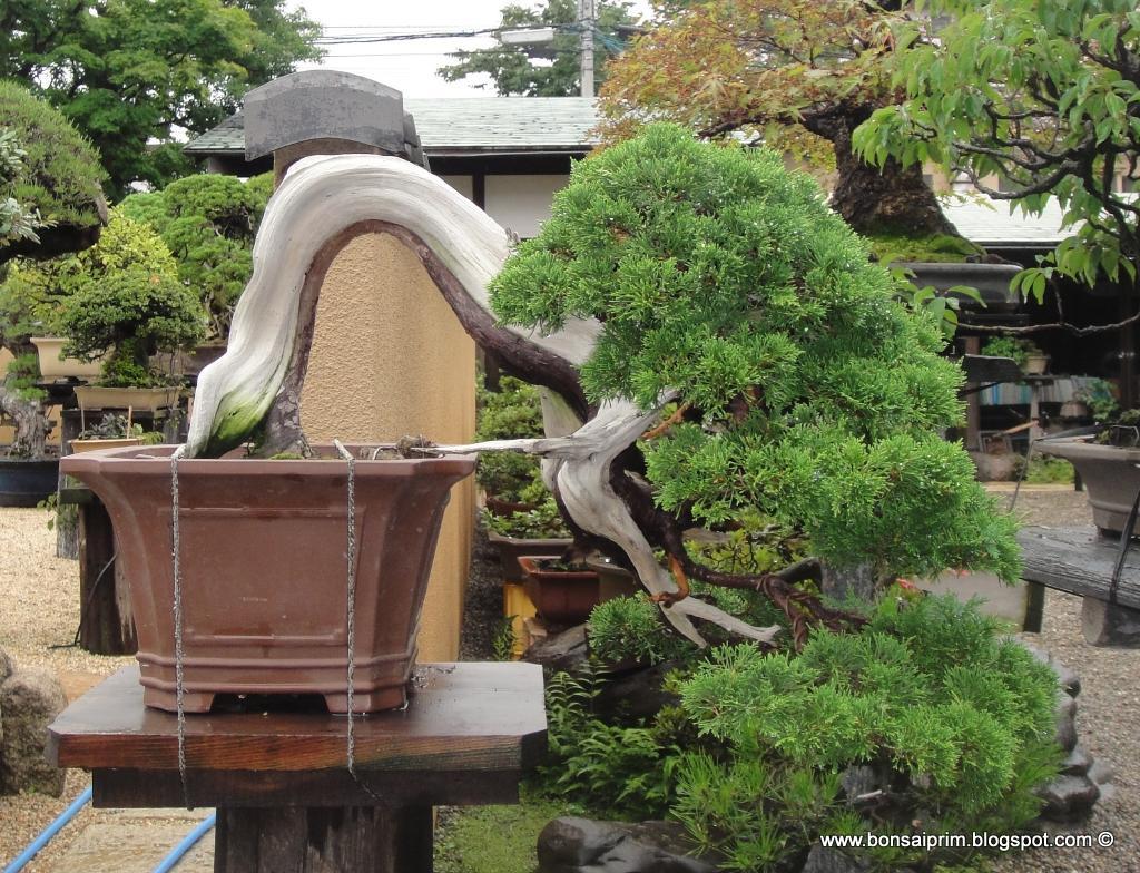 Визит в Shunka-En DSC09078
