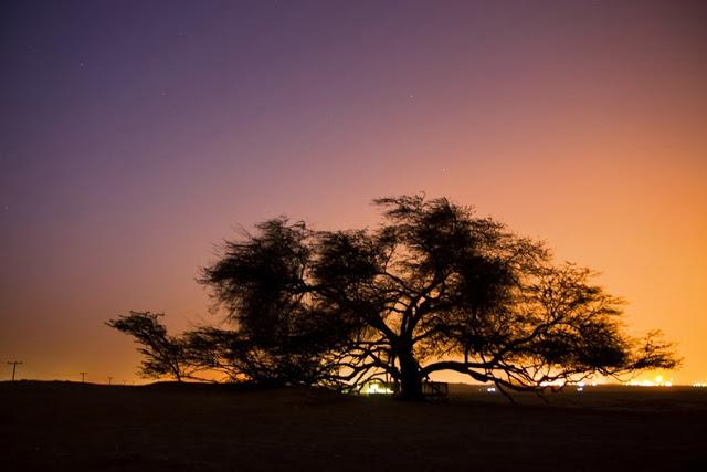 El Árbol de la Vida en el desierto de Bahrein 3563542980_06631acfdf_b