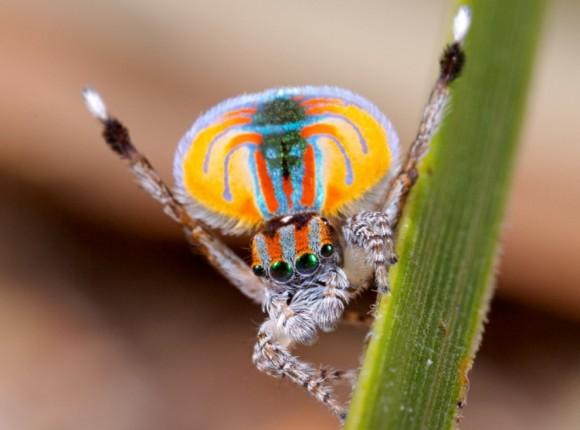 اجمل عنكبوت فى العالم Image0011-580x430