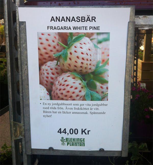 الأناناولة فاكهة جديدة بنكهة الأناناس والفراولة Image035-700775