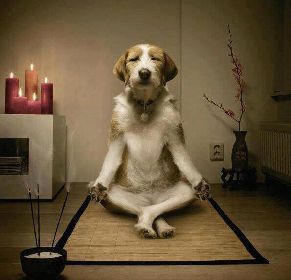 Présentation Gaby Chien-calme-zen