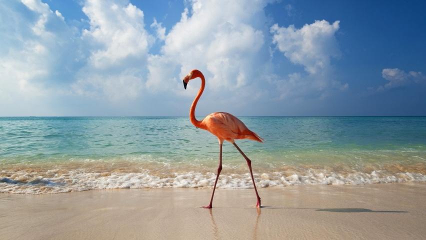 CACHORROS Y ANIMALES Pink_flamingo-852x480
