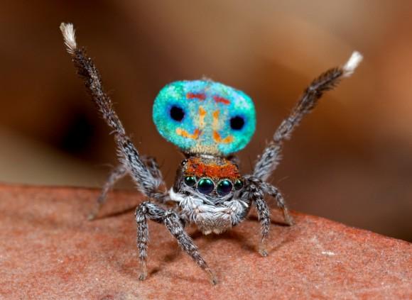 اجمل عنكبوت فى العالم Image028-580x423