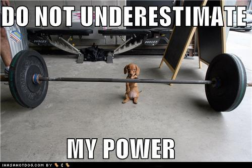 Que préférez vous chien ou chat? - Page 4 Cute-puppy-pictures-do-not-underestimate-my-power