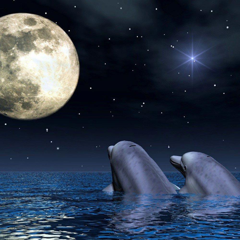 Bienvenidos al nuevo foro de apoyo a Noe #289 / 28.09.15 ~ 06.10.15 Fotos-amor-delfines