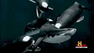 Superdepredadores del mar : Livyatan Melvillei vs Megalodon vs Brygmophyseter Brygmophyseter%2Bvs%2BMegalodon