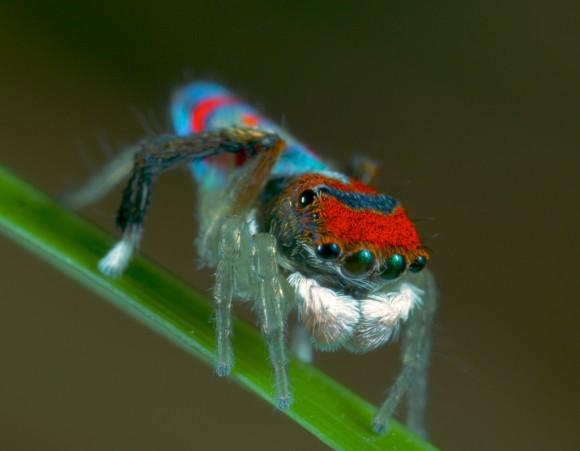 اجمل عنكبوت فى العالم Image037-580x451