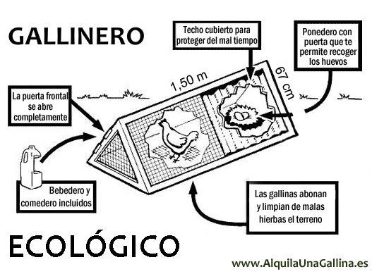 gallinas Gallinero_ecologico