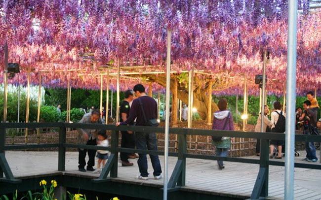 அழகிய ஜப்பான் படங்கள் சில....... - Page 2 Water_Fall_Flowers_Japan_2