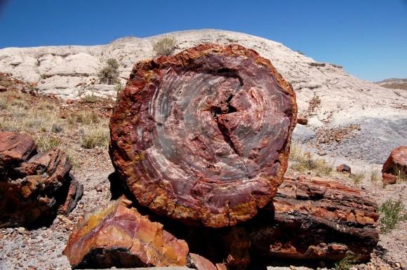 أشجار تحمل أسرار الماضي PetrifiedForestGiantLogs5-580x385