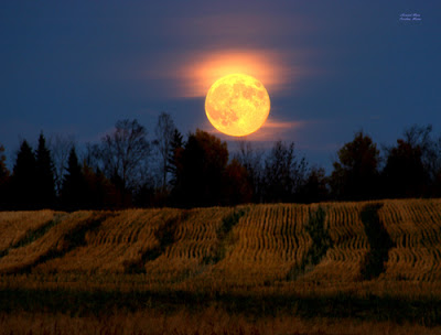 How The Friday The 13th Full Harvest Moon In Pisces Will Affect You Based On Your Zodiac Sign Harvest-moon