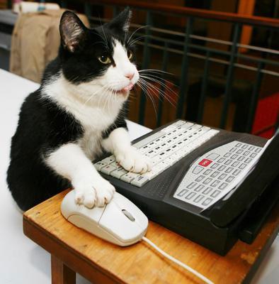 Ovni, photo et Manhattan… Cat-at-computer