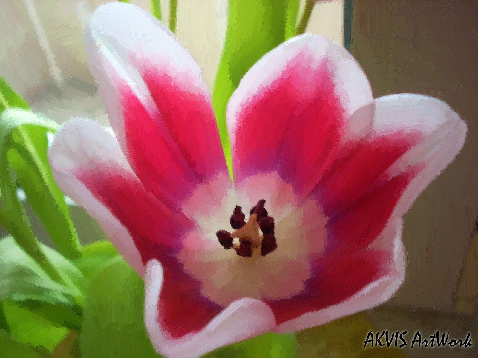 மீனு தரும் இயற்கை அழகு அன்பு மலர்கள்........ Flower19