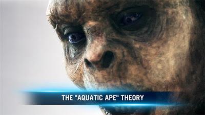 ¿Existen las sirenas?  136977762532114072500201197_MNE_Aquatic_Ape_Theory