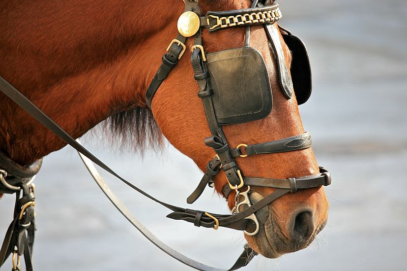 nouvelle .22 800px-Horse_Blinkers_%25284240744343%2529