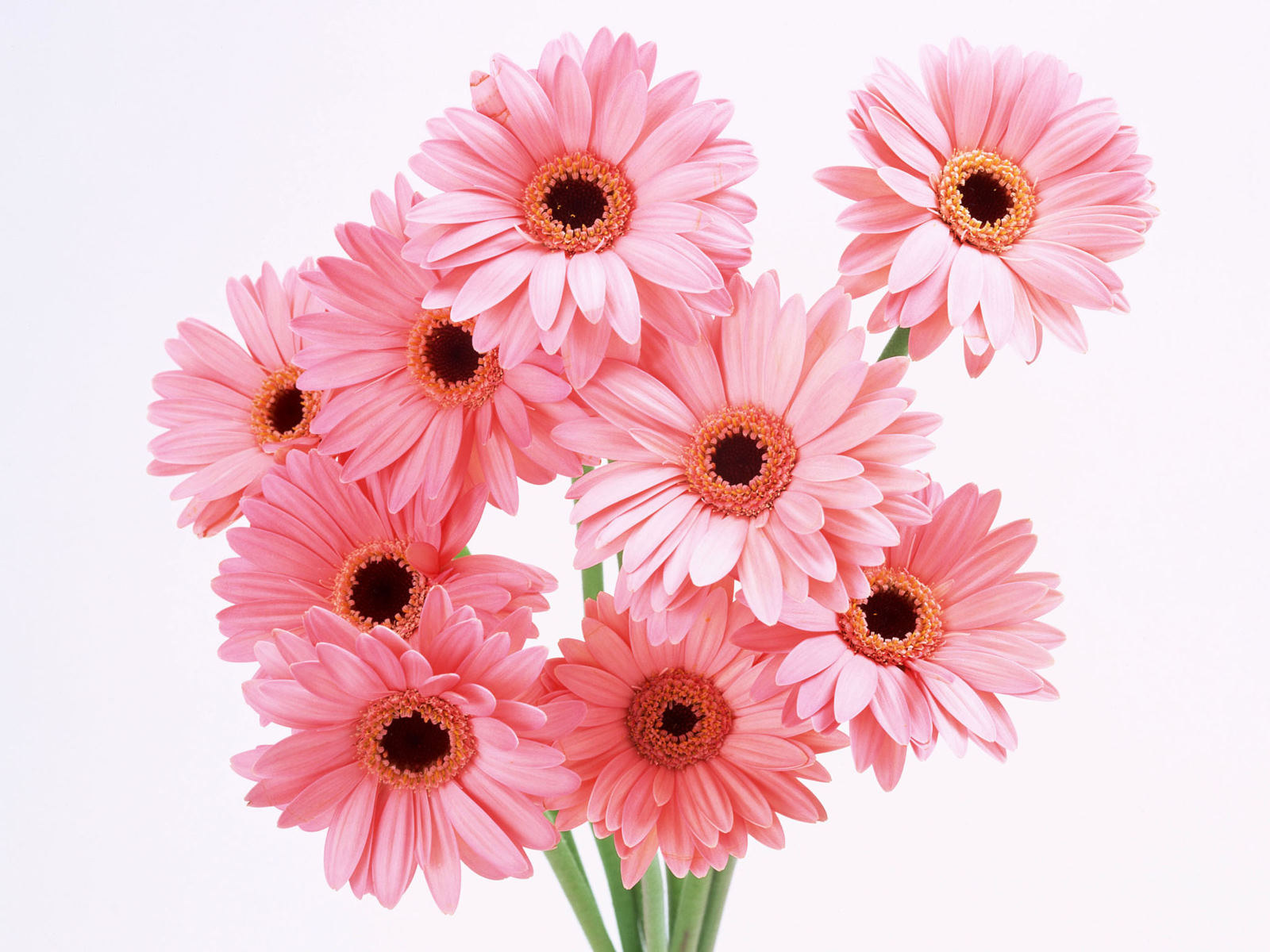 வால்பேப்பர்கள் ( flowers wallpapers ) 01 - Page 4 K-Sharpe-Pink-Flowers