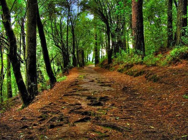 Nuevo Proyecto: Terrarios de Bosque.  Hdr%2Bbosque%2B1