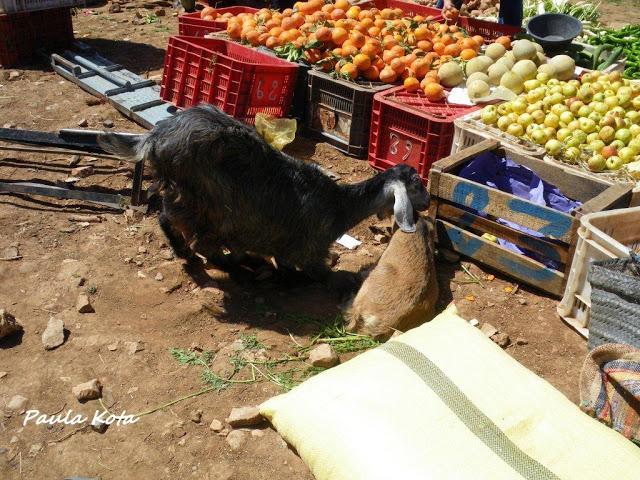 marrocos - Na Terra do Sol Poente - Viagem a solo por Marrocos - Página 2 IMGP0453