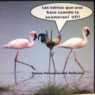 VAMOS A REIR!!!!! Imagenes-graciosas-de-amor-aves