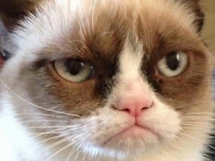 Web Amusement Emporium - Page 4 Grumpy-cat-large-face