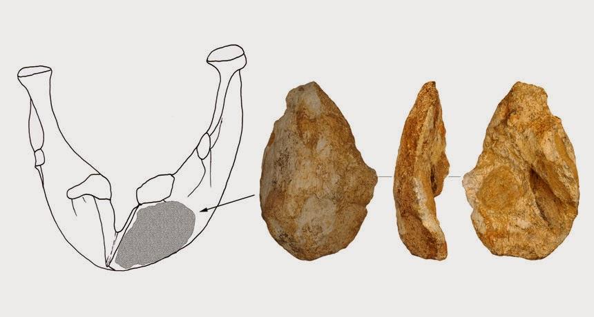 Un biface en os (mandibule de Stegodon) découvert en Chine Hacha_hueso