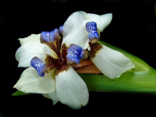 கண் கவர் அரிய மலர்கள் Rare_flowers_orchid_13