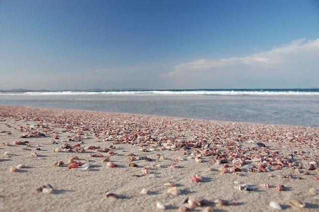 4 شواطئ صدفية مذهلة حول العالم Shell-beach-australia-5%5B2%5D