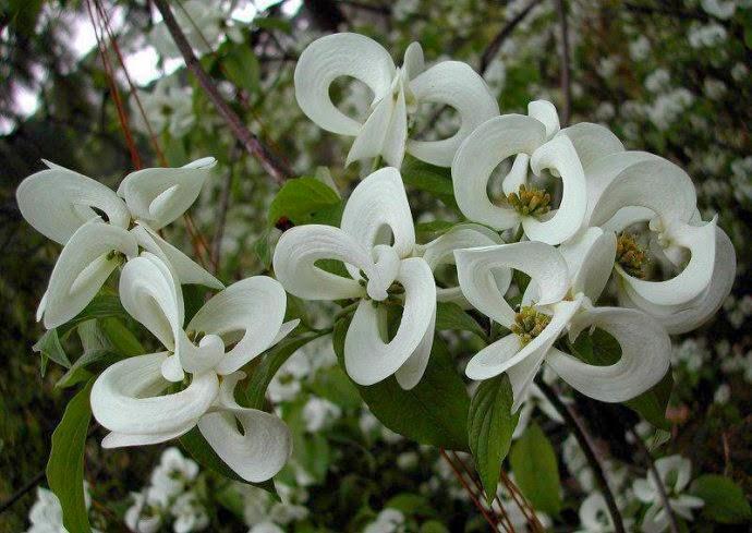 Magično cveće! Untitledattachment00010
