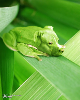 the hi¡… rise, the cube, diesnayeLands   …atheHoop… Pitbullfrog