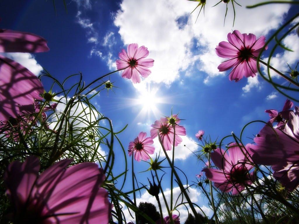 Pozadina za vaš desktop - Page 5 Proljetno-cvijece-download-besplatne-pozadine-za-desktop-slike-za-kompjuter-proljece-cvijece-biljke-priroda-godisnja-doba