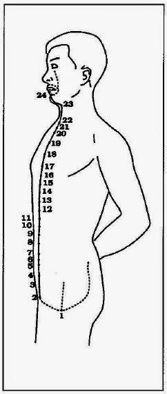 QIXI : De la légende au traité d'alchimie interne  Conception