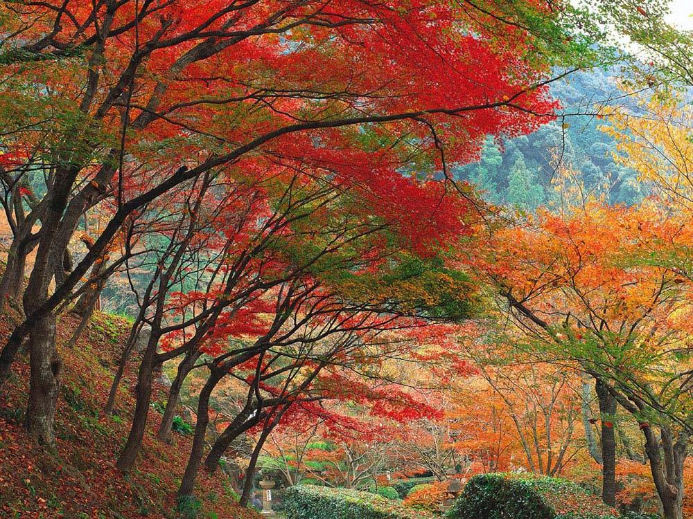 EL OTOÑO SE ACERCA CON MUY POCO RUIDO...* Fall-season-colored-leaves-beautiful-photo