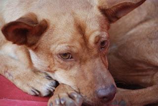 Tiere in Spanien - aus dem Blogspot kopiert DSC_0742