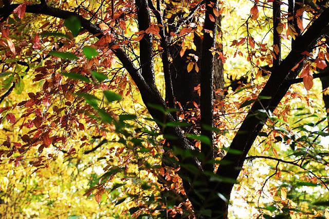 ... Y caen las hojas, llega ....¡¡¡ EL Otoño !!! - Página 3 DSC_0031