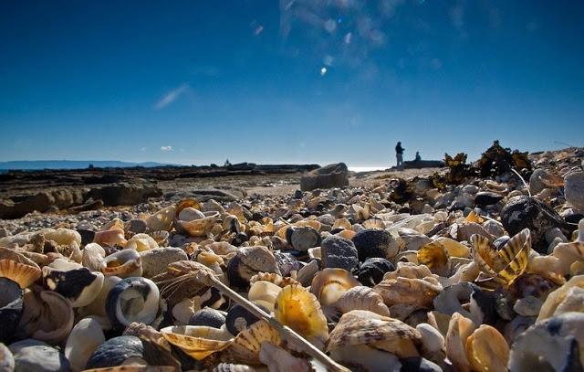 4 شواطئ صدفية مذهلة حول العالم Shell-beach-australia-2%5B2%5D