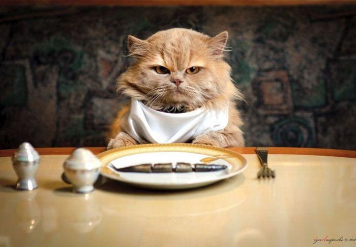 Offtopiqueando - Página 5 Gato-en-la-mesa