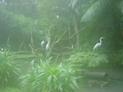 مناظر روعه في البرازيل Amazonrainforest