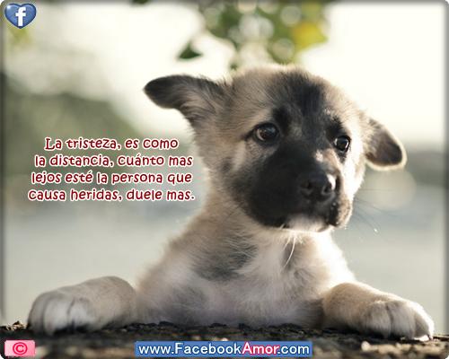 Sin dueño Imagenes-bonitas-de-lindo-perro-con-frases-de-tristeza-para-muro-de-facebook