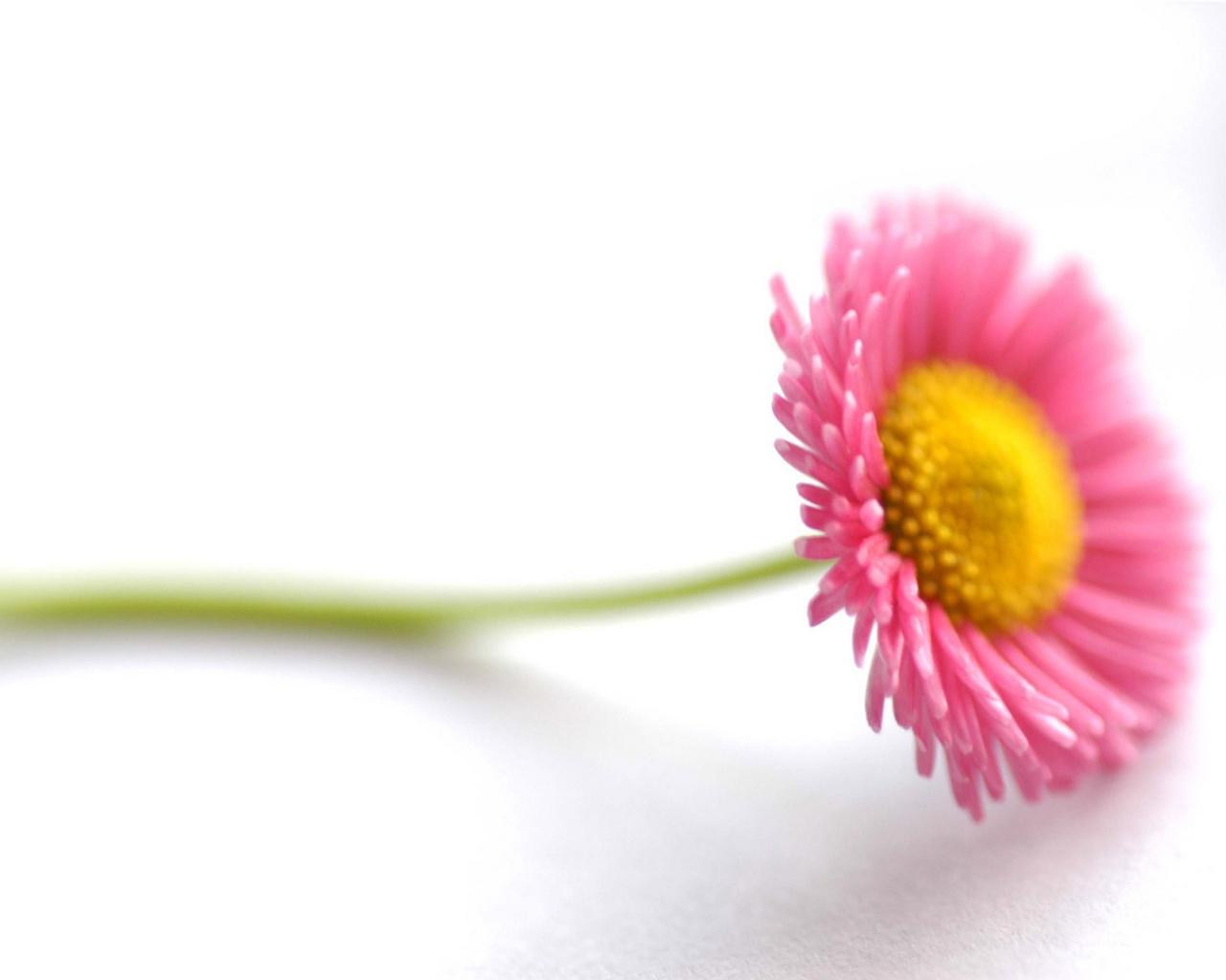 வால்பேப்பர்கள் ( flowers wallpapers ) - Page 3 Beautiful_flower-normal5.4