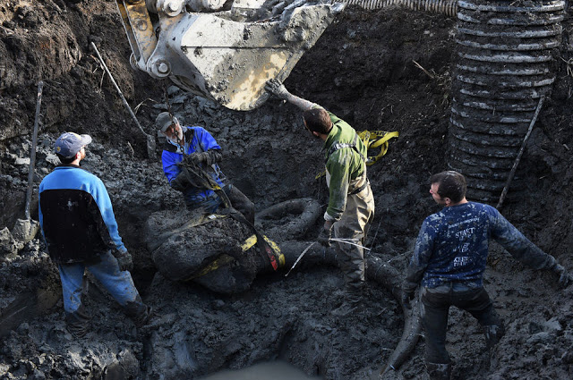 Michigan farmer finds 15K-year-old woolly mammoth skull stashed by Ancient Natives. -5fcff26dd5fe9c88