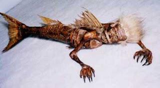 حورية البحر بين الحقيقة والخيال  Mermaid-chennai-body