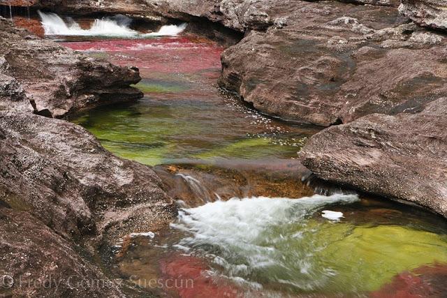 أجمل أنهار العالم Cano-cristales-2%5B2%5D